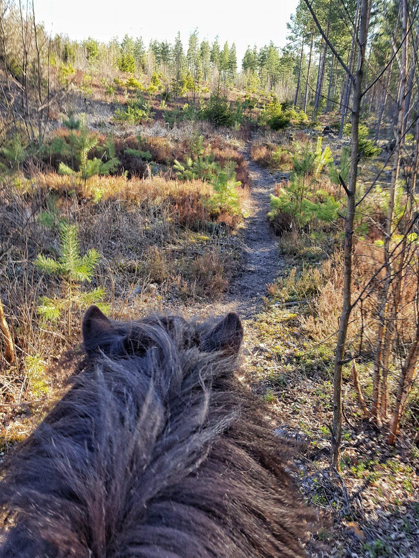 Metsäpolulla_luonto-opas