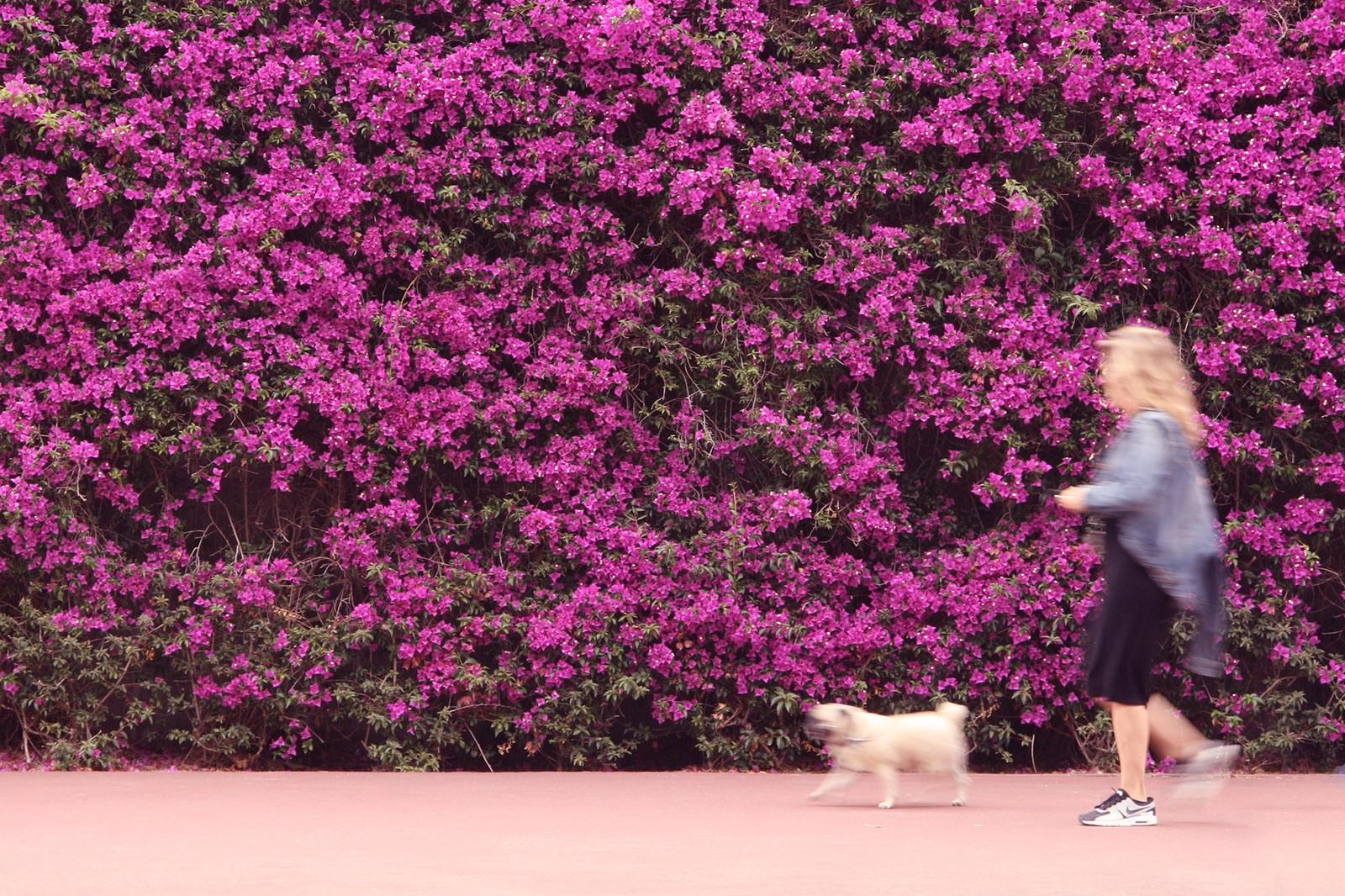 Kevytyrittäjyys koiranulkoiluttajana