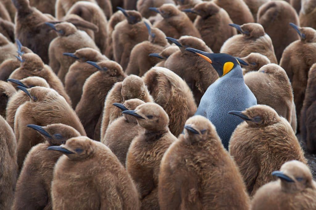 Joukosta erottuva pingviini