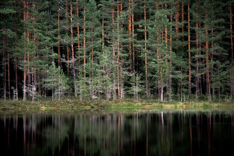 valokuva metsästä