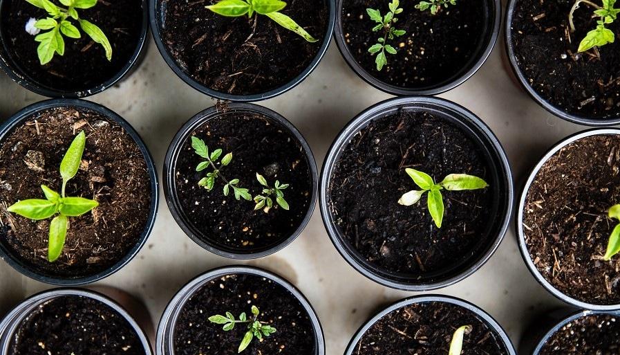 Kasvavia taimia ruukuissa