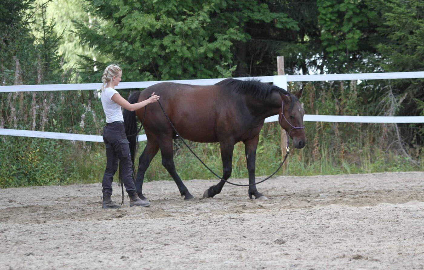 Elina Hautala opastaa hevosta maasta käsin.
